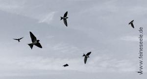 Ruhe finden Himmel mit Vögeln